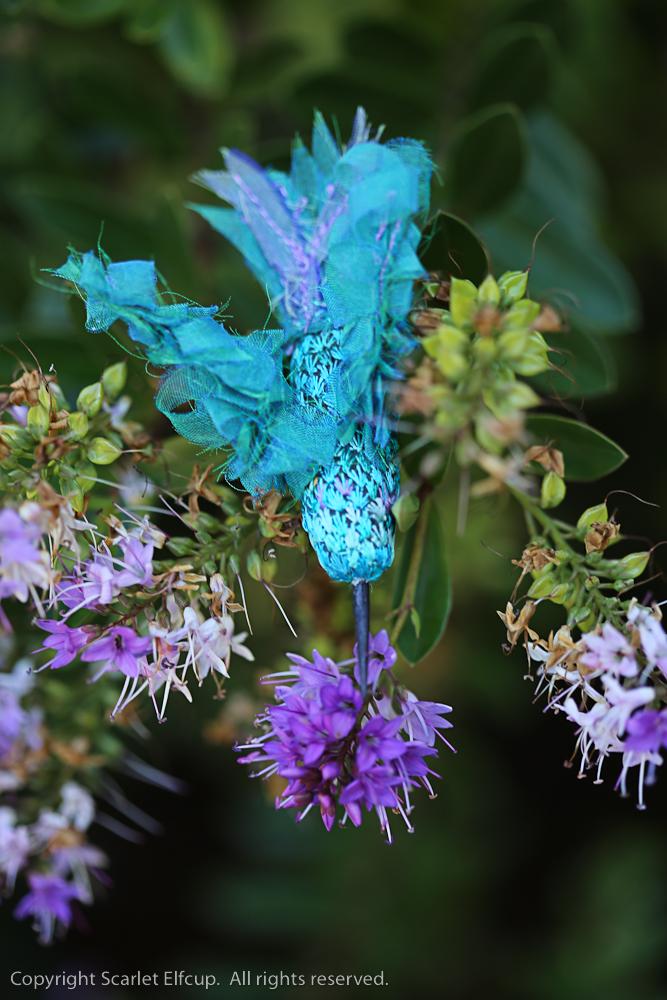 Hummingbird-111.jpg
