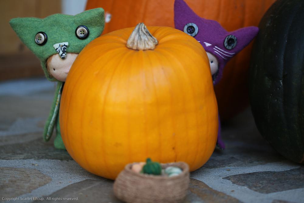 Fall Critters-42.jpg