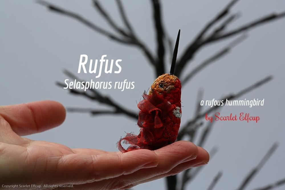 Rufus-12.jpg