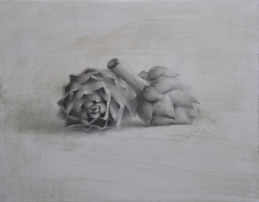 "Yuka Imata  Antichokes   11""x14"" graphite on prepared paper"