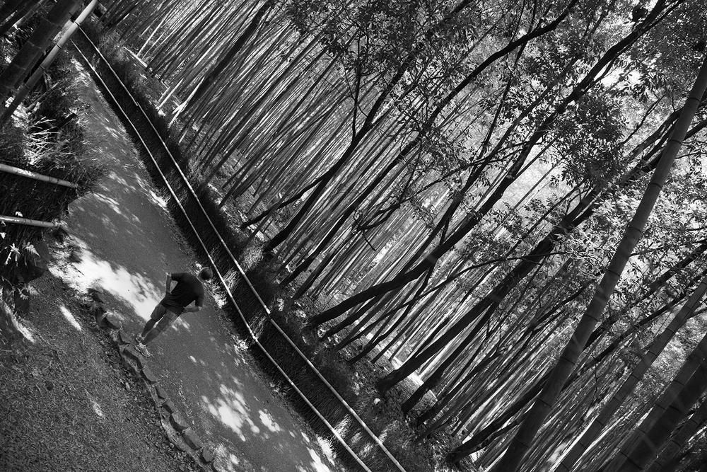 Bamboo Voyager (Arashiyama, Kyoto)