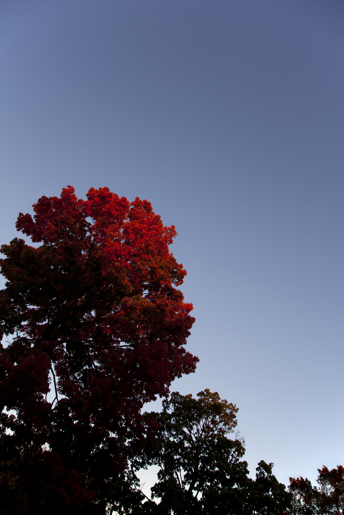 Red Tree (Evanston)