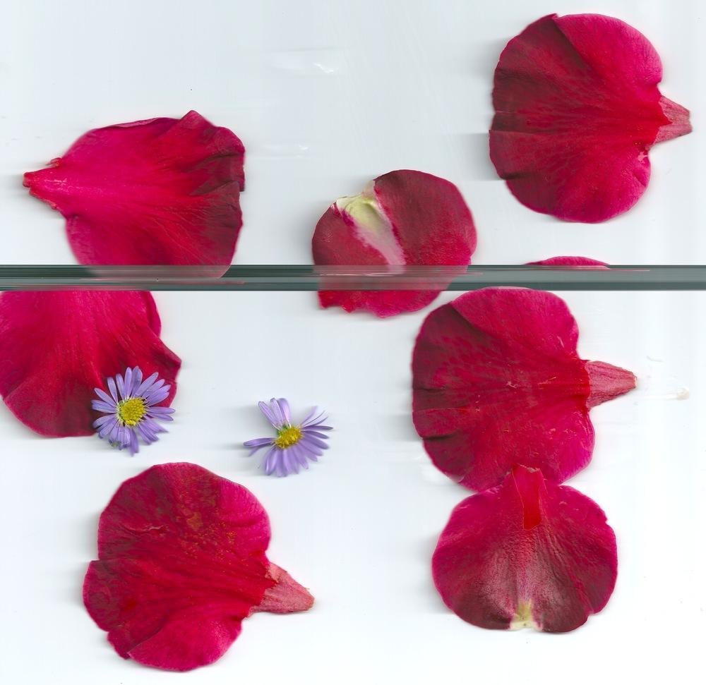 flowers 2 2.jpeg