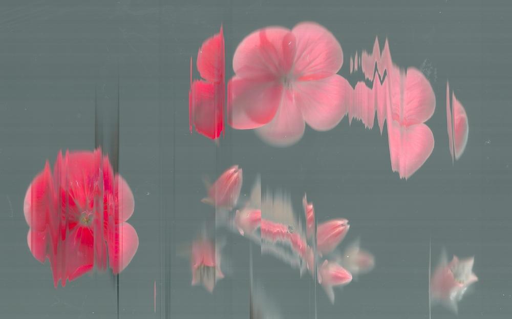 flowers 2 3.jpeg
