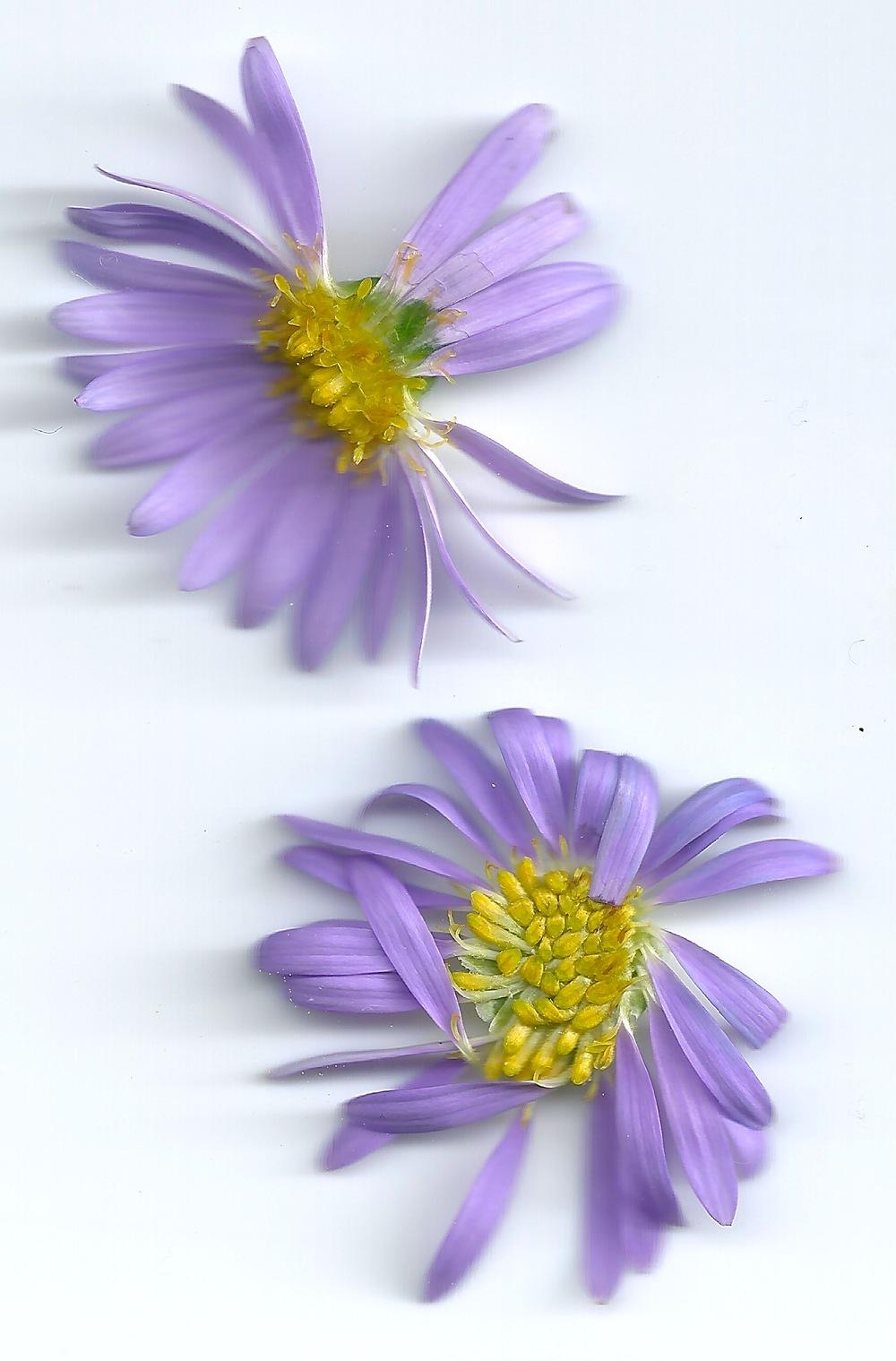 flowers 2 5.jpeg