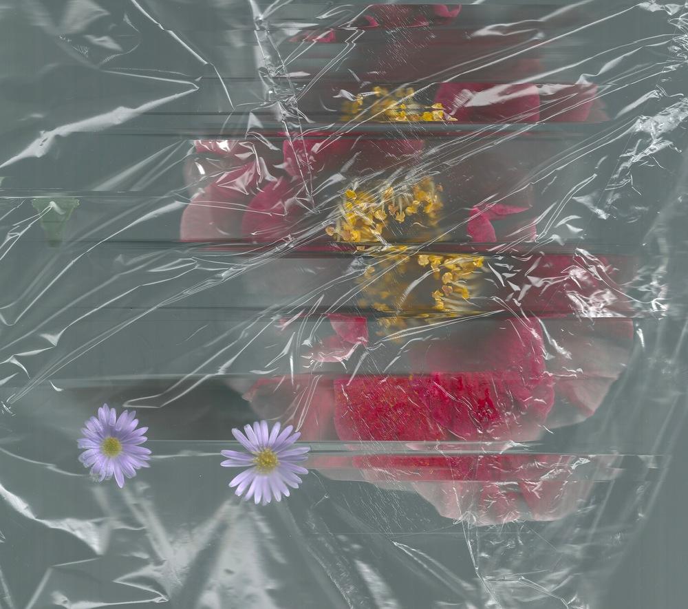 flowers 2 1.jpeg