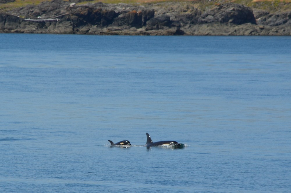 orcas san juan island, washington / warporweft.com