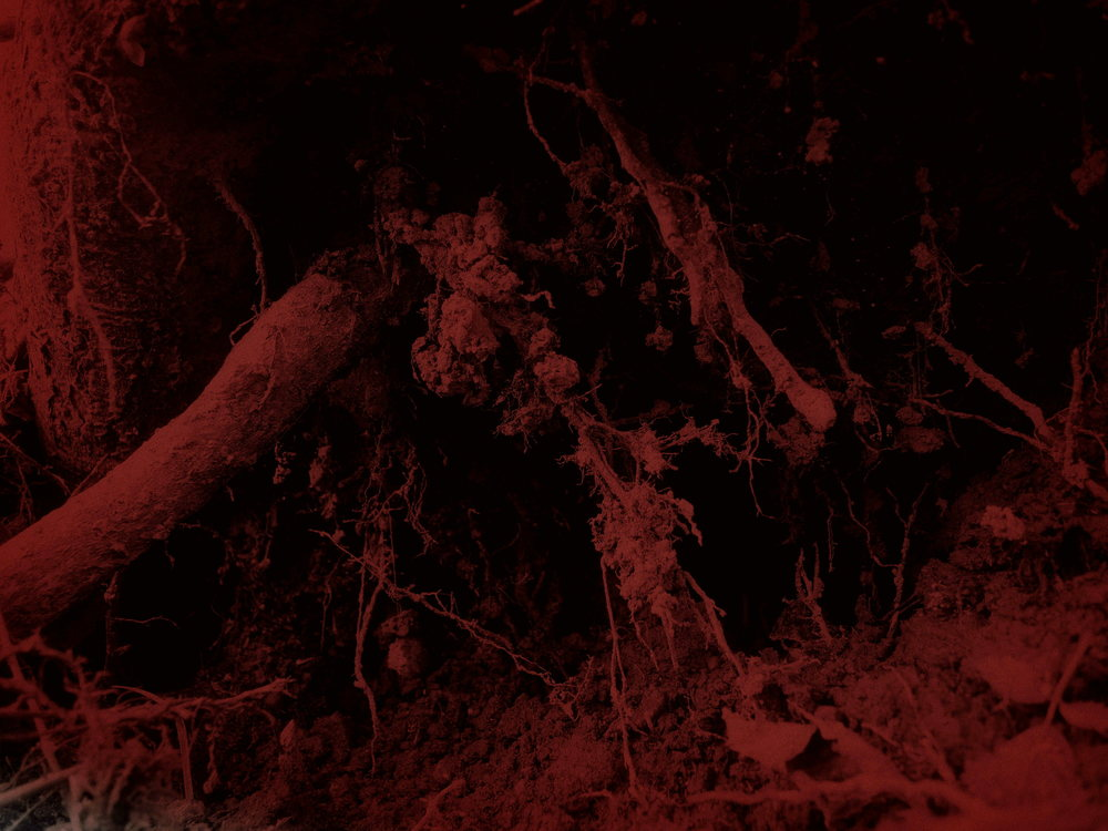 tree veins in red.JPG