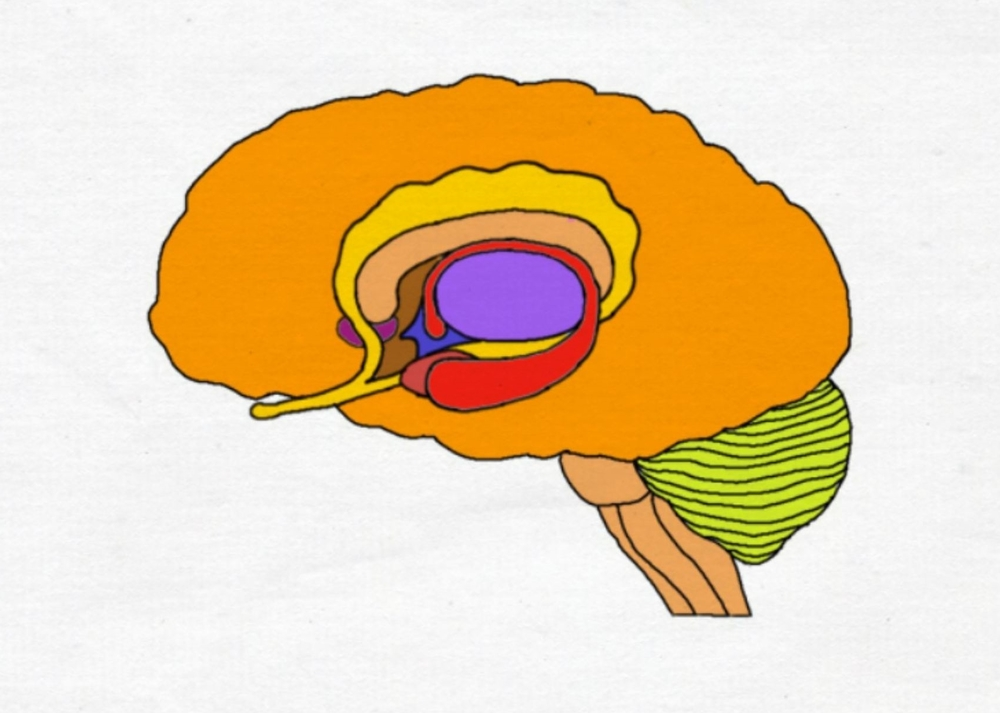 "2-Minute Neuroscience<a href=""/blog/2-minute-neuroscience-limbic-system"">→</a><strong>Limbic System</strong>"