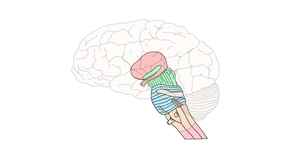 "<p>Know Your Brain<strong>Brainstem<a href=""/blog/know-your-brain-brainstem"">Read more →</a></strong></p>"