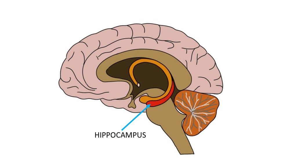 "<p>Know Your Brain<strong>Hippocampus<a href=""/blog/2014/5/23/know-your-brain-hippocampus"">Read more →</a></strong></p>"