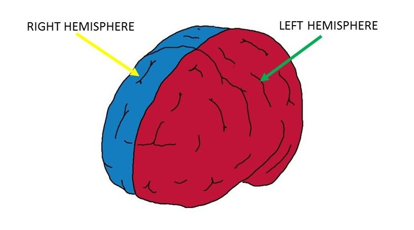 Cerebral hemispheres.