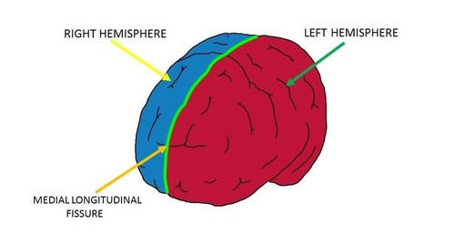 Medial longitudinal fissure - definition — Neuroscientifically ...