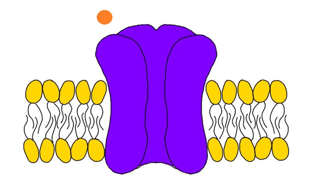 Receptor (purple).