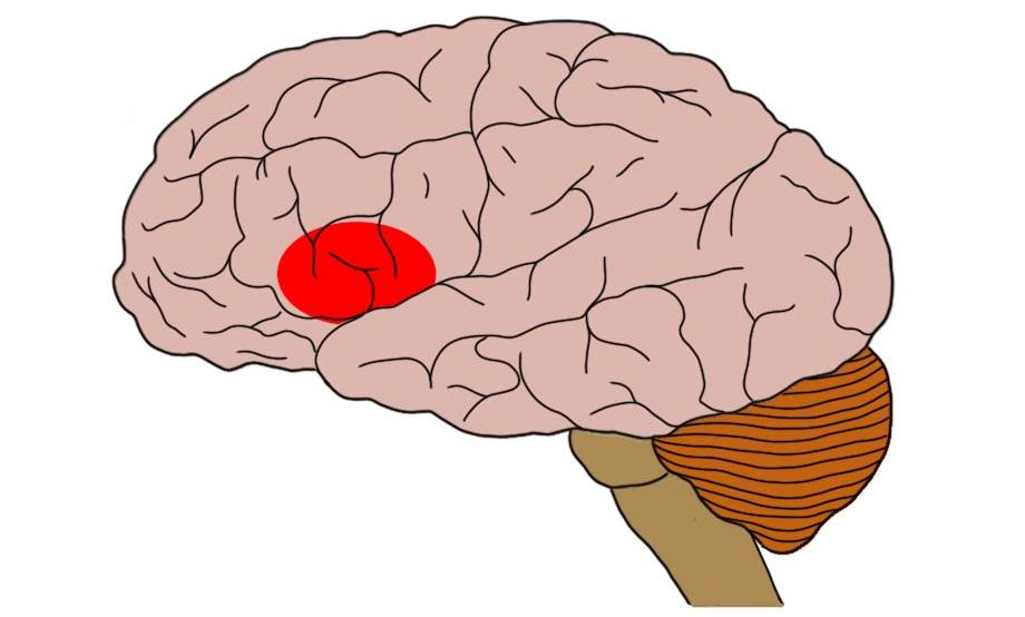 "2-Minute Neuroscience<a href=""/blog/2-minute-neuroscience-brocas-area"">→</a><strong>Broca's Area</strong>"