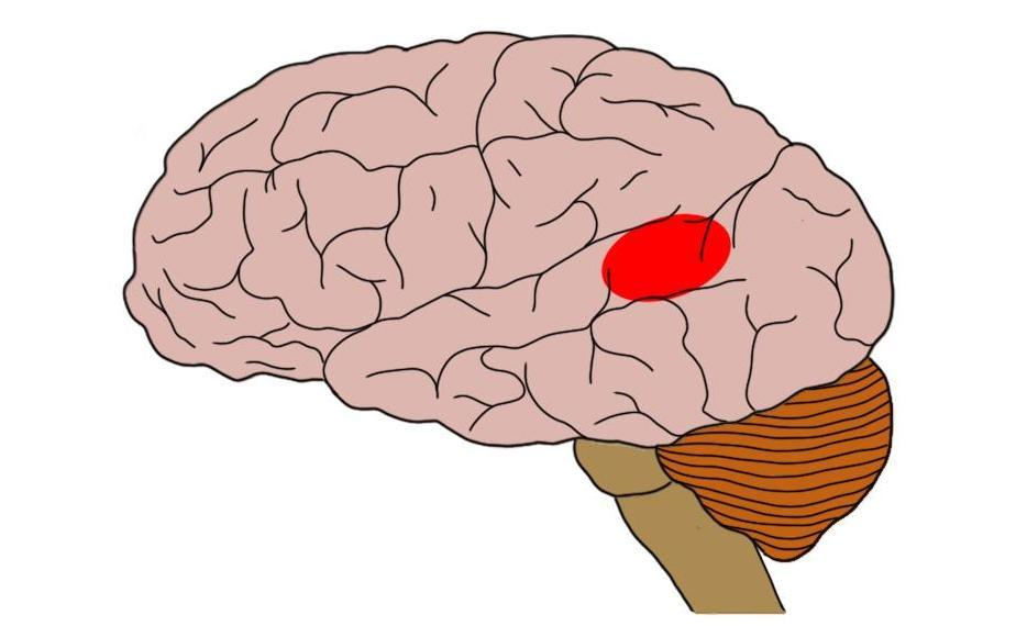 "2-Minute Neuroscience<a href=""/blog/2-minute-neuroscience-wernickes-area"">→</a><strong>Wernicke's Area</strong>"
