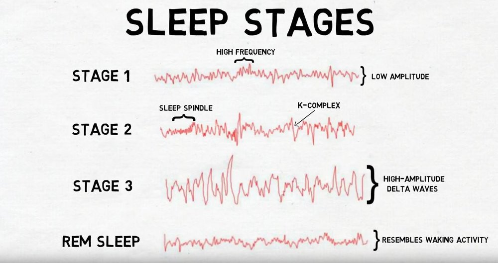 "2-Minute Neuroscience<a href=""/blog/2-minute-neuroscience-stages-of-sleep"">→</a><strong>Stages of Sleep</strong>"