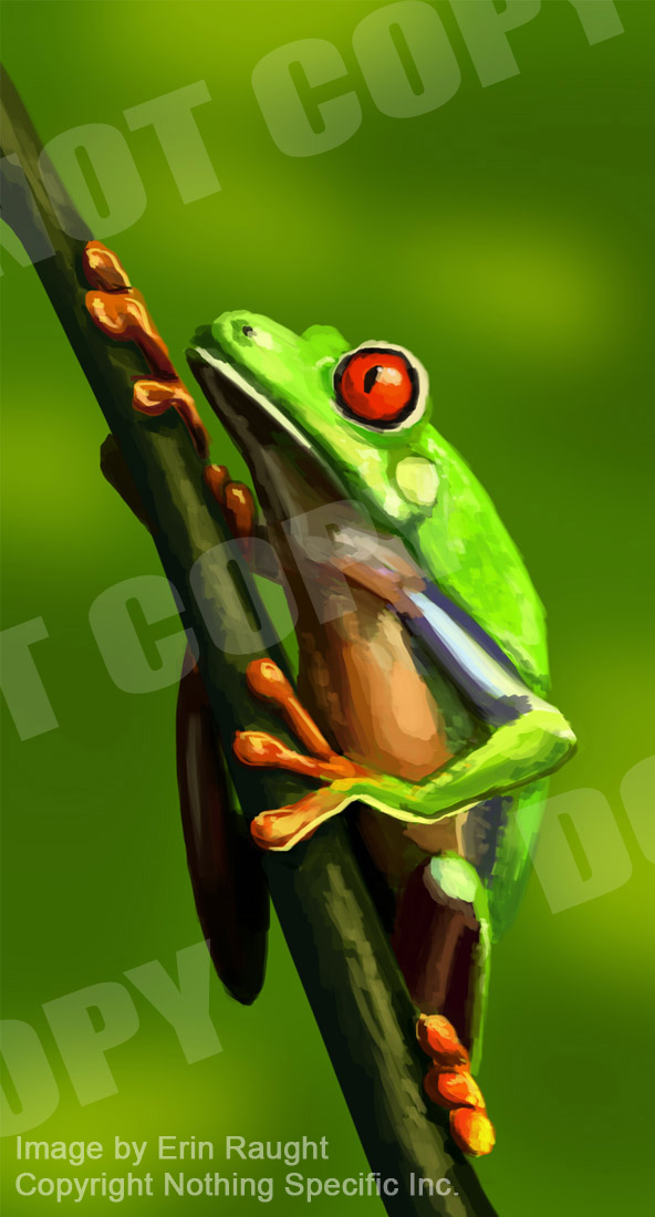 7236 - Green Red Eyed Tree Frog - Rainforest.jpg