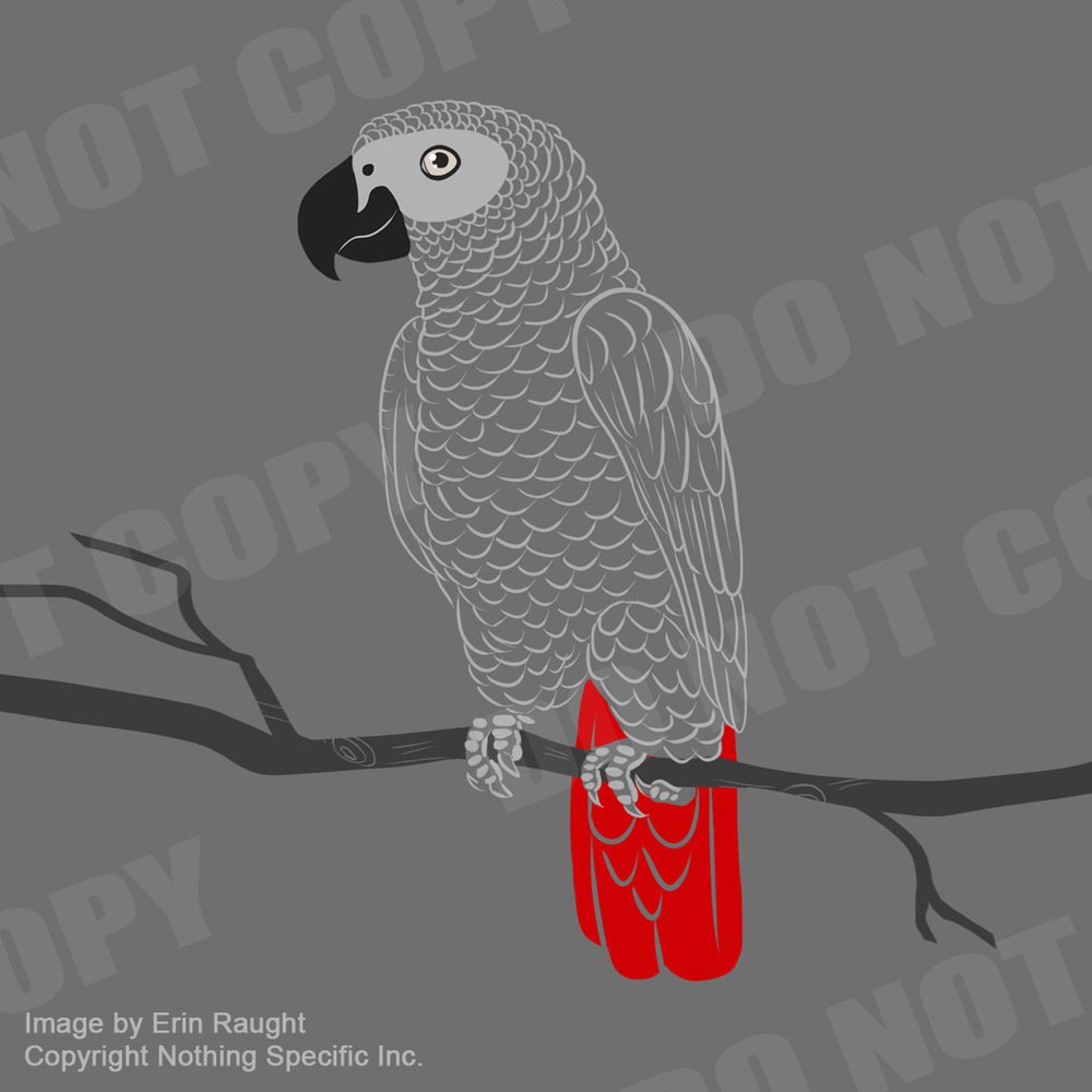 7318 - African Grey - Bird Parrot Pet.jpg