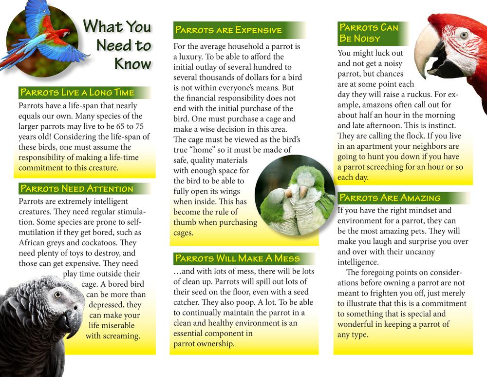Brochure_Assignment-2.jpg