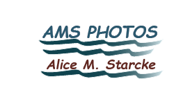 AMS Photos ~ Alice M. Starcke