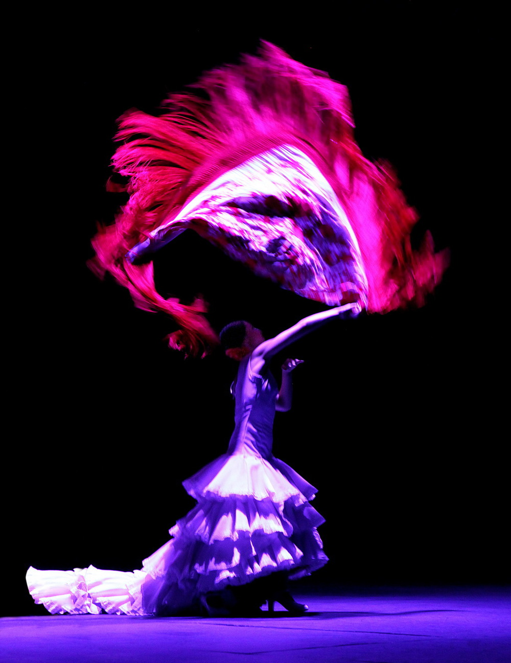 Flamenko I_resize.JPG