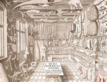 Museo di Ole Worm, Leiden 1655