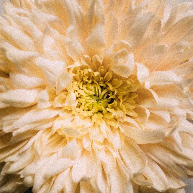 #flowerfriday