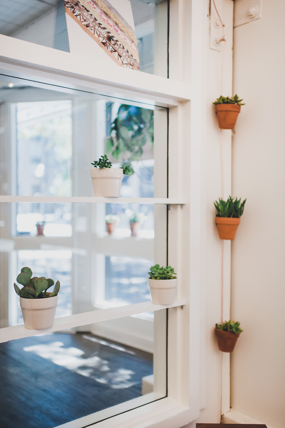 How To Care For Indoor Plants Succulents Ferns And Mosses The