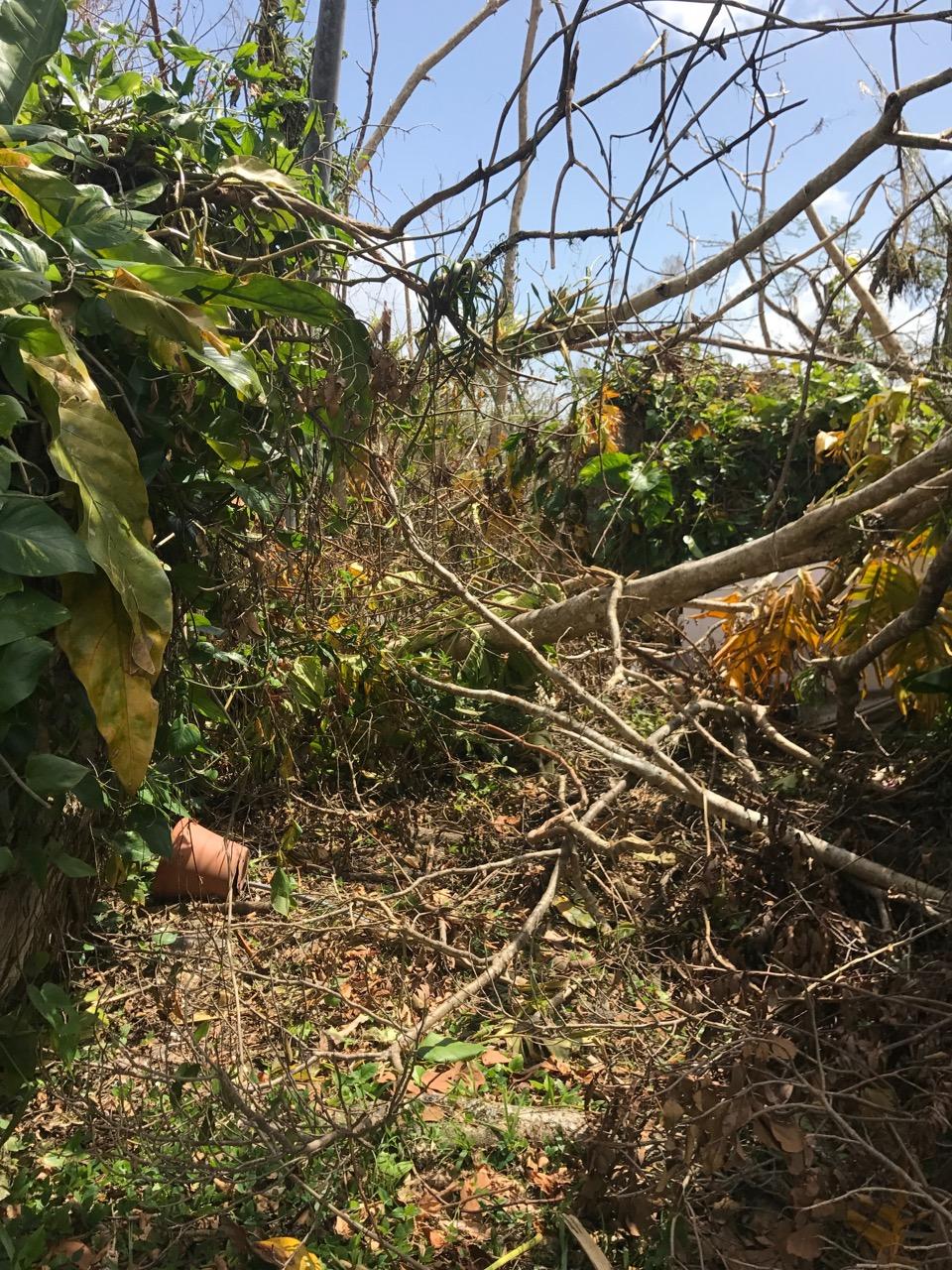 View from the Compost Studio, Aguas Buenas, Puerto Rico. November 2017 (post Maria)