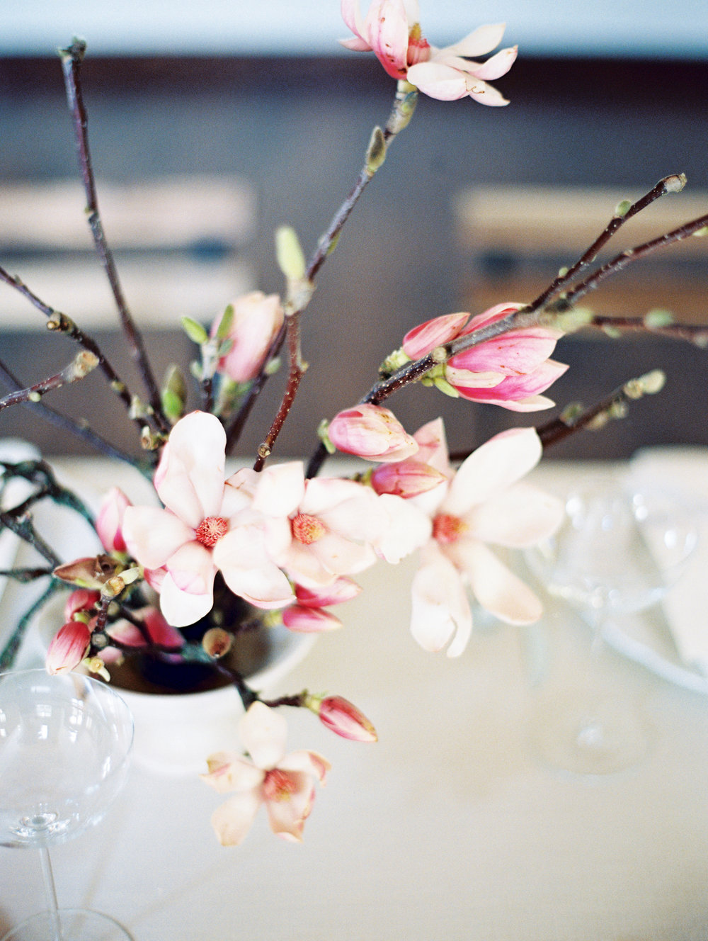 Magnolia_0170.jpg