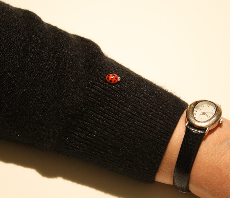 I often wear a ladybug on my sleeve. It's amazing how many people stop to tell me I've got a visitor!