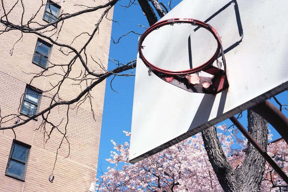 SpringHoop.jpg