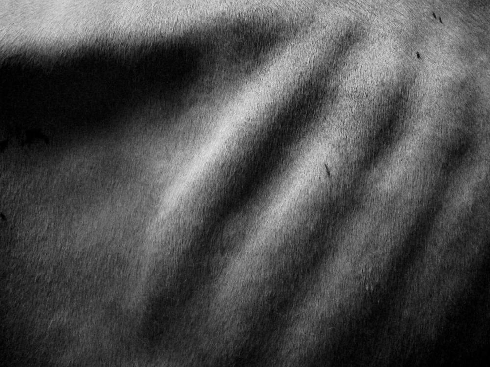 Ribcage-DeathGrip.jpg
