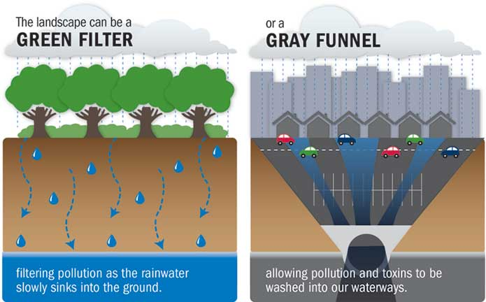 Infrographic from the Chesapeake Bay Foundation showing plant material's ability to support stormwater management quality and quantity goals.http://www.cbf.org/about-the-bay/issues/polluted-runoff