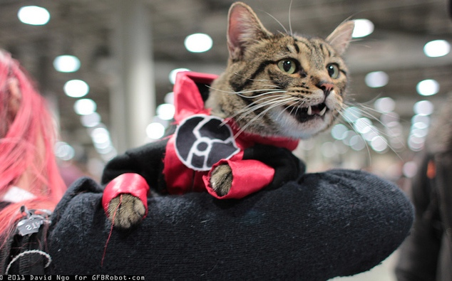 Dex-Starr kitty cosplay