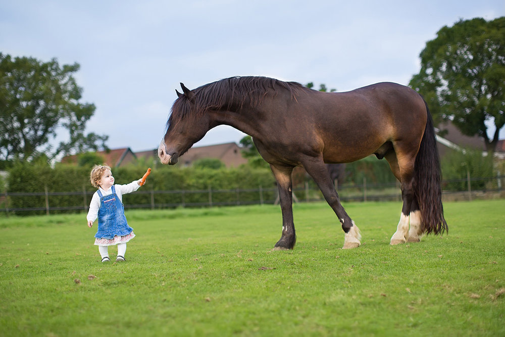 It's actually pretty unsafe for a child to be alone with a horse. And she's holding that carrot wrong.