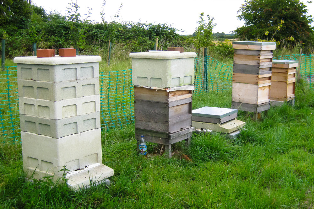 the hives in various states of activity; L-R productive hive with 4 supers, merging two hives, another productive hive, new but stable colony.