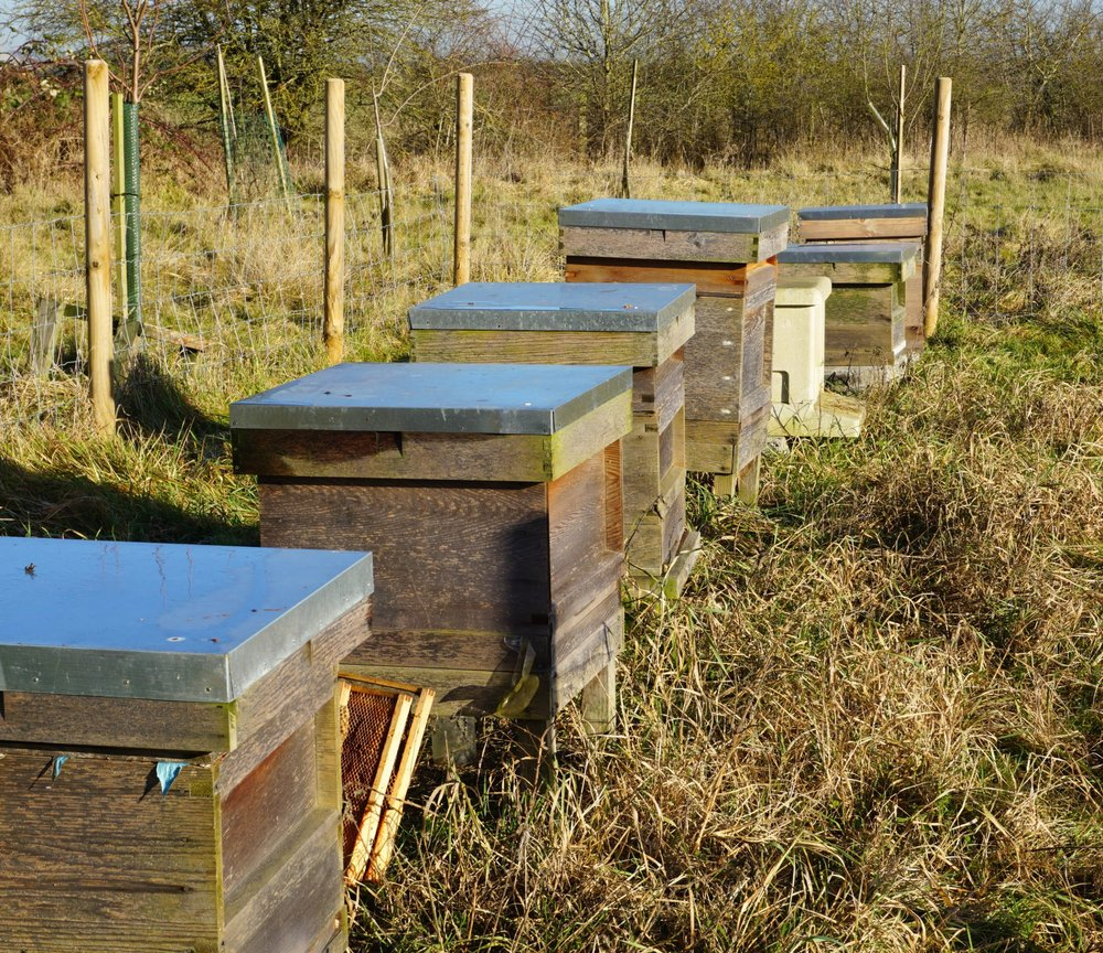 Our bee-hives January