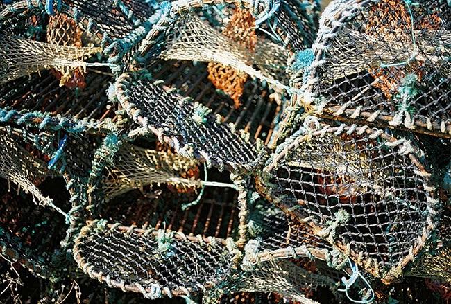 9-lobster.jpg