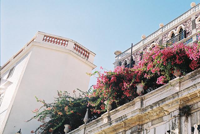 pink+flowers.jpg