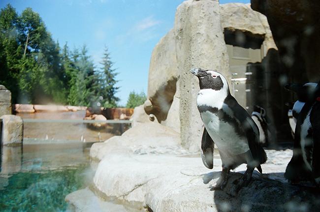 18-Penguin.png