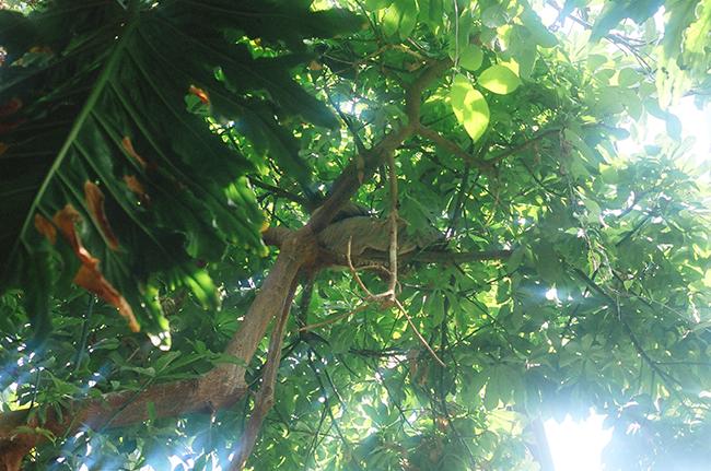 17-sloth.png