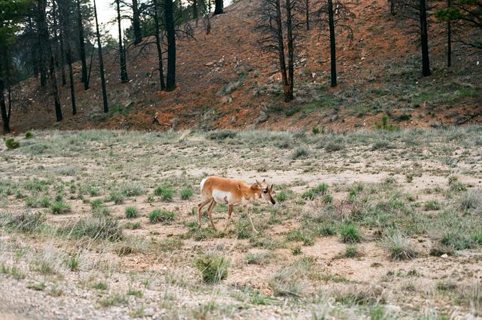 Bryce_Canyon12.jpg