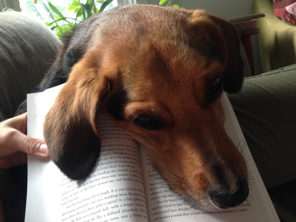 Rooga reading.jpg