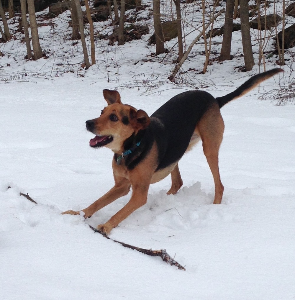 stick snowdog.jpg