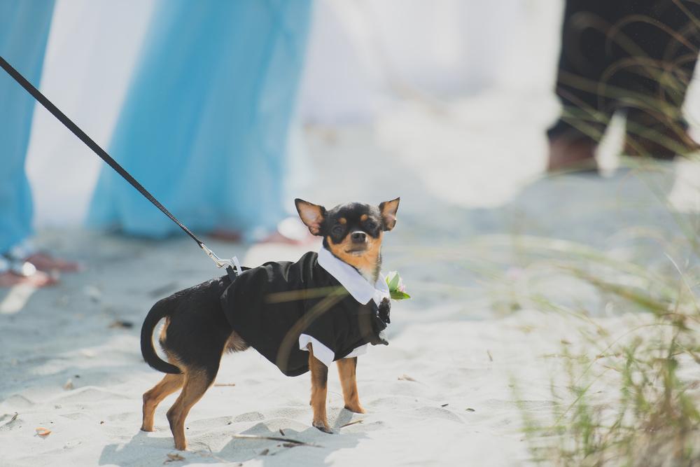 Holden Beach Wedding-1-4.jpg