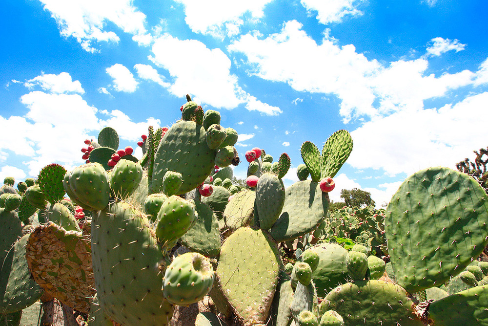 cactusfarm1.jpg