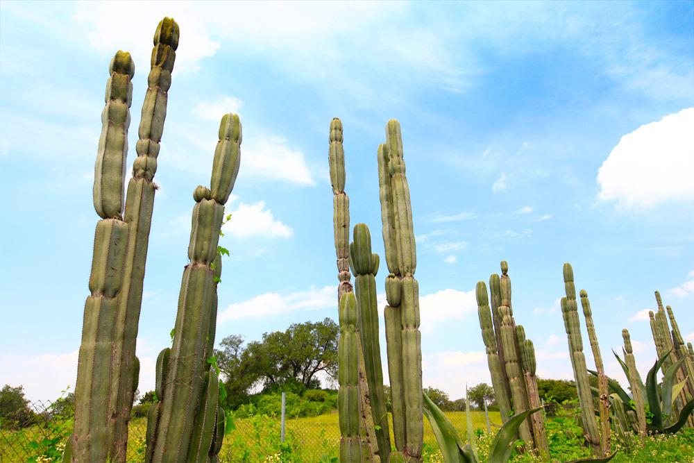 tallcactus.jpg