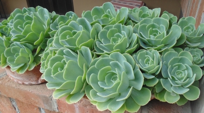 potted succulents on poolhouse patio wall